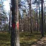 Защитники леса в бухте Моторная на шаг ближе к цели