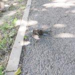 Жителей Мурино тревожит мор среди птиц