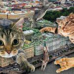 Петербург отмечает кошачий день