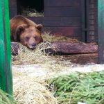 Центр реабилитации диких животных под Петербургом просит помощи