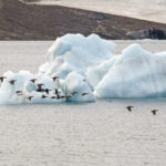 «Корабелка» близ Выборга возьмётся за Арктику